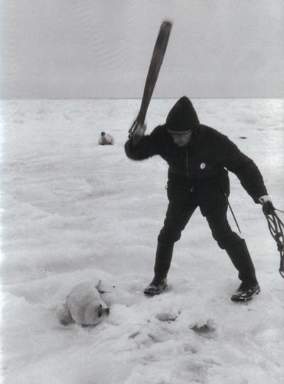 cacciatore-foche.jpg